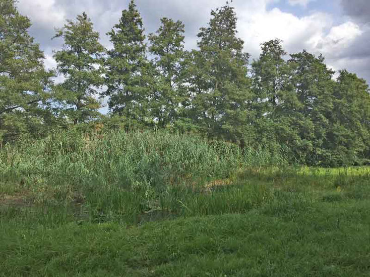 Biotop im Naturschutzgebiet Langhorst in Hainburg