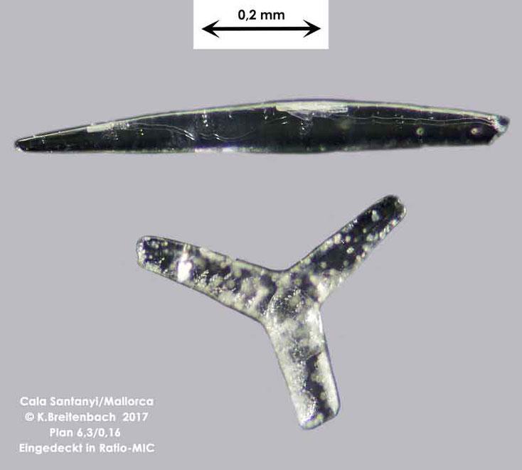 Bild 34 Transparente Objekte aus Mallorca Cala Santanyi, Art: konnte von mir nicht bestimmt werden