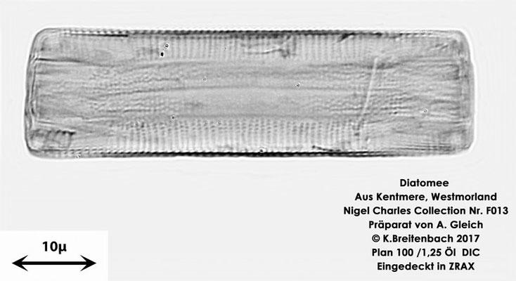 Bild 14 Diatomeen aus Kentmere Westmoreland UK Art: Unbekannt