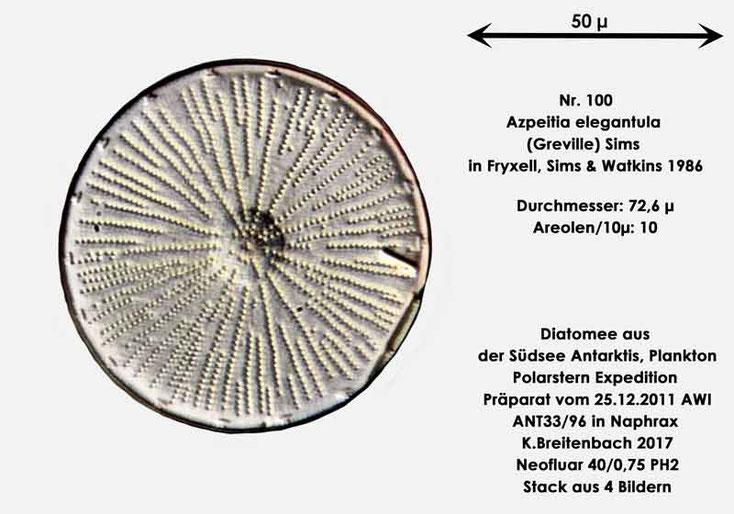 Bild 20 Diatomee aus dem anarktischen Ozean Präparat: ANT33/96; Art: Azpeitia elegantula (Greville) Sims in Fryxell, Sims & Watkins 1986