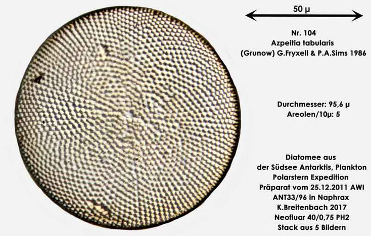 Bild 21 Diatomee aus dem anarktischen Ozean Präparat: ANT33/96; Art: Azpeitia tabularis (Grunow) G.Fryxell & P.A.Sims 1986