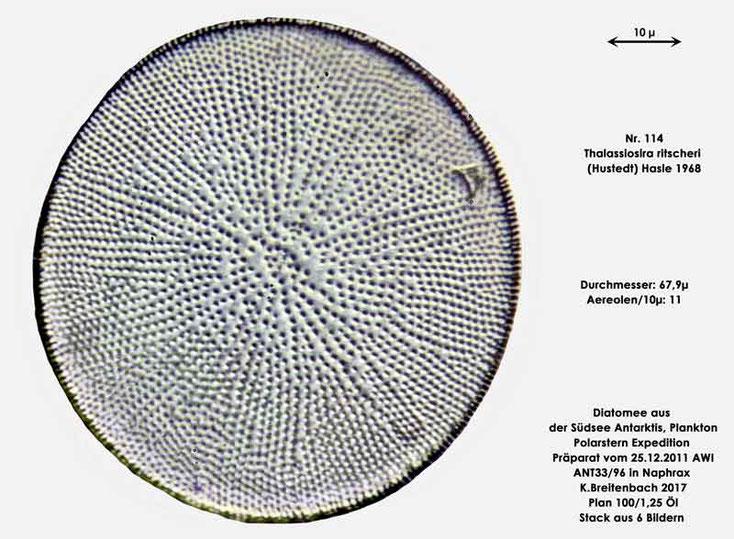 Bild 27 Diatomee aus dem anarktischen Ozean Präparat: ANT33/96; Art: Thalassiosira ritscheri (Hustedt) Hasle 1968