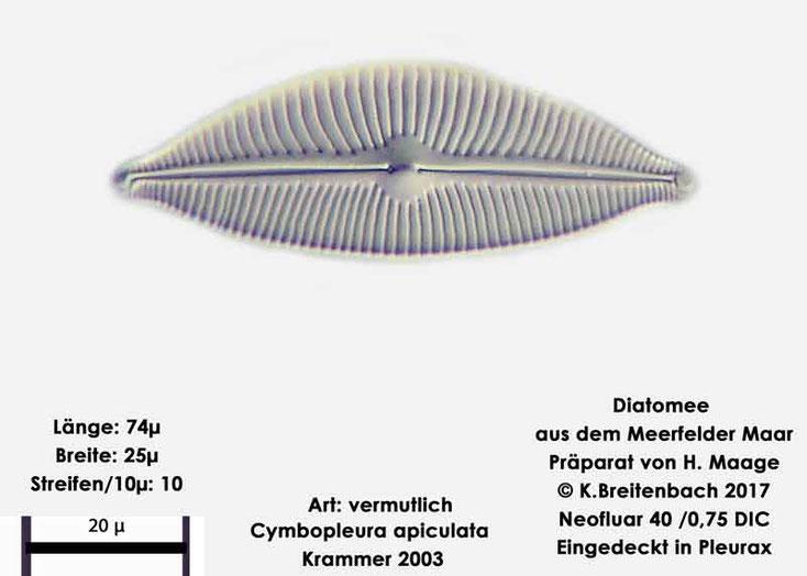 Diatomeen, Meerfelder Maar