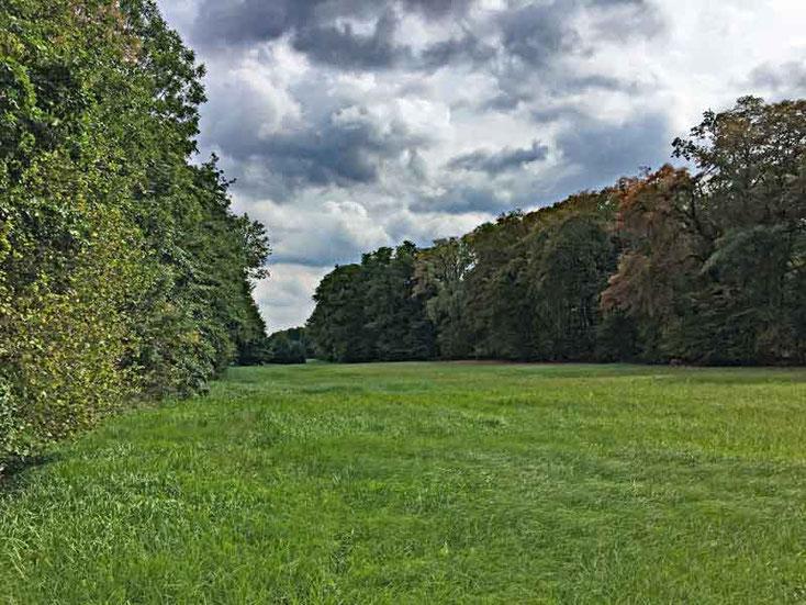 Blick auf das Naturschutzgebiet Langhorst in Hainburg