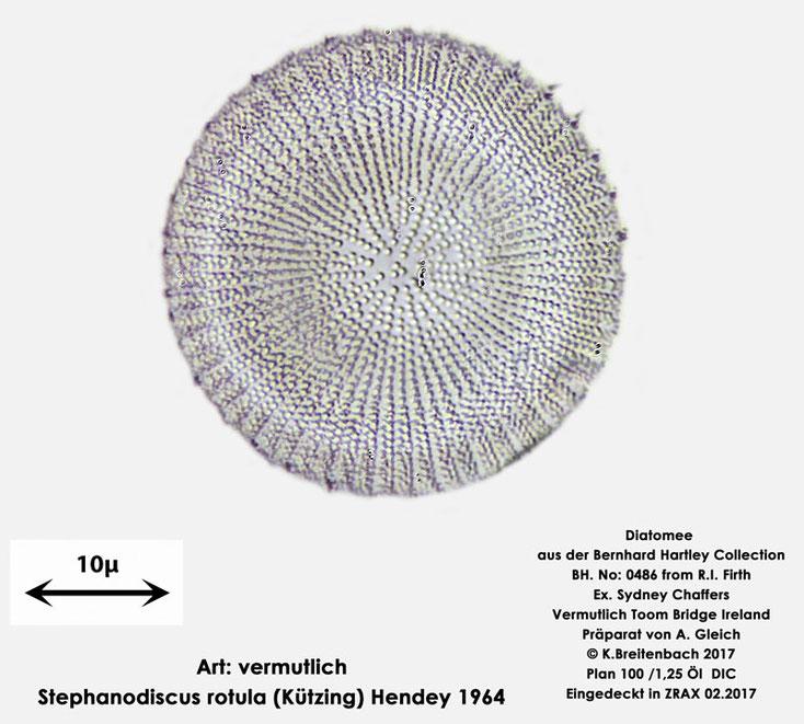 Bild 3 Diatomee aus Toomebridge Irland, Süßwasser Art: vermutlich Stephanodiscus rotula (Kützing) Hendey 1964