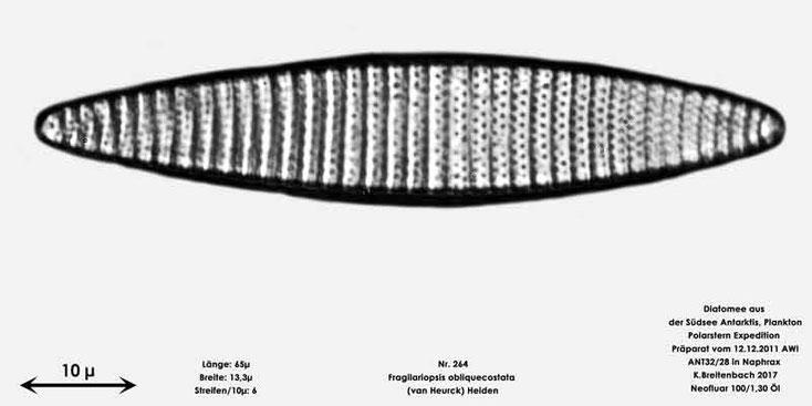 Bild 7 Diatomee aus dem anarktischen Ozean Präparat: ANT32/28; Art: Fragilariopsis obliquecostata (van Heurck) Heiden 1928