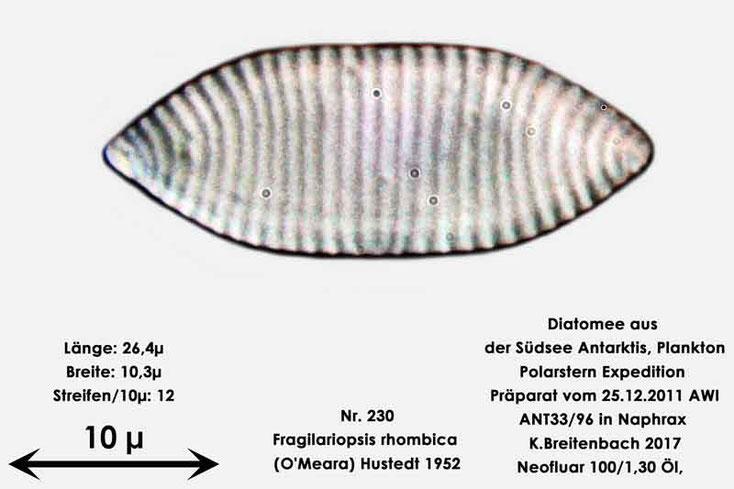 Bild 6 Diatomee aus dem anarktischen Ozean Präparat: ANT33/96; Art: Fragilariopsis rhombica (O'Meara) Hustedt 1952