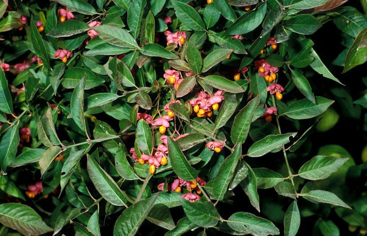 Bild 1a Bildquelle: www.botanikus.de/
