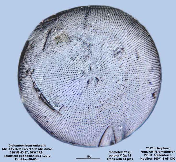 Bild 1 Diatomeen aus der Antarktis Art: Thalassiosira australis sp M.Peragallo 1921