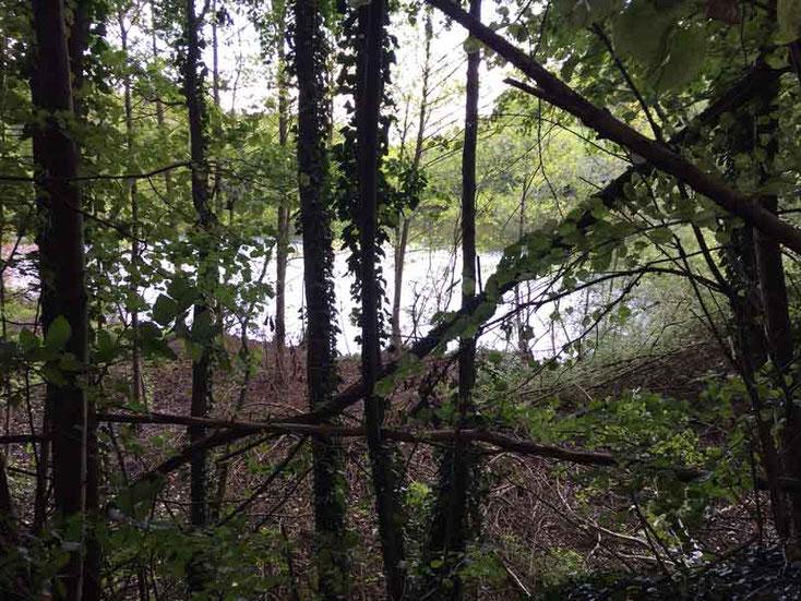 Am Anglersee, dem Steinbruchsee zwischen Lämmerspiel und Steinheim