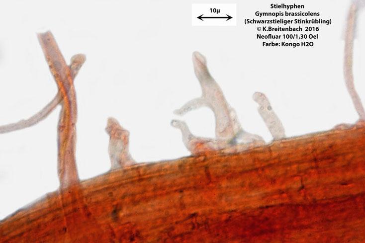 Stielhyphen