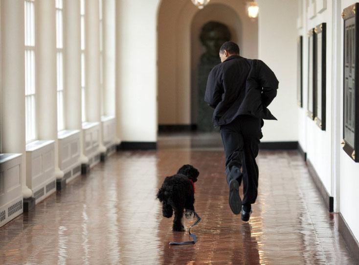 Obama a du chien - 14/04/2009  Bo, un chien d'eau portugais de 6 mois, découvre les couloirs de la Maison-Blanche sous l'oeil attentif de son nouveau maître, le président américain Barack Obama.