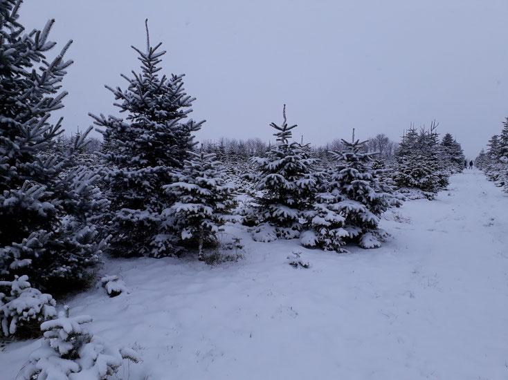 Winter in Korneuburg