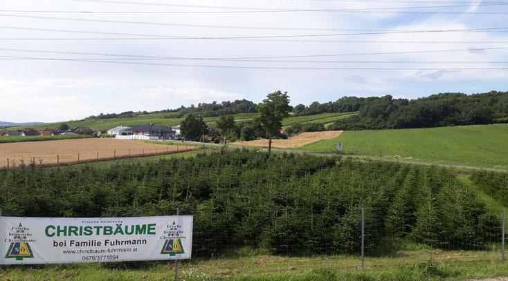 Anlage in Stetten im Juli 2020