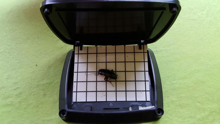 insect détctor AF