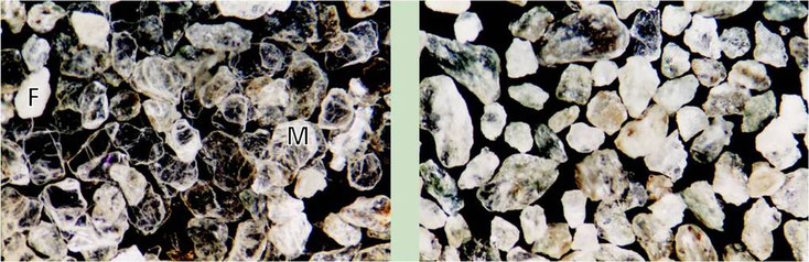 Left: before flottation/ right: after flottation (F:  feldspar grains; M: muscovite grains