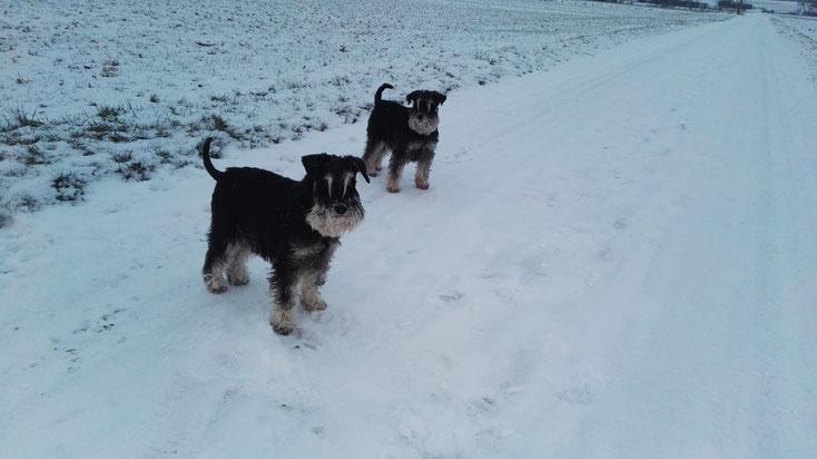 Links Pia, rechts Brünni, am Abend im Schnee.