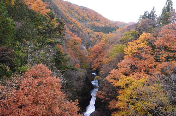 吹割の滝紅葉