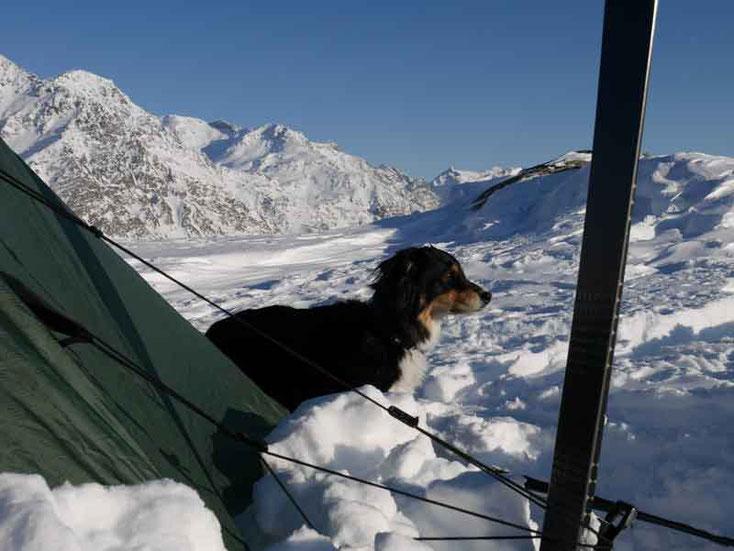 Hundebeziehung durch vertrauen und gemeinsame Grenzerfahrungen