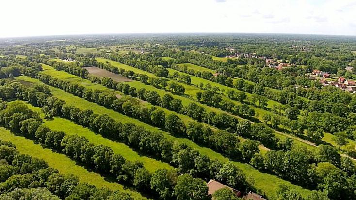 Hist.Sternwallheckenlandschaft im Ortsteil Ihren - über 230 Jahre alt