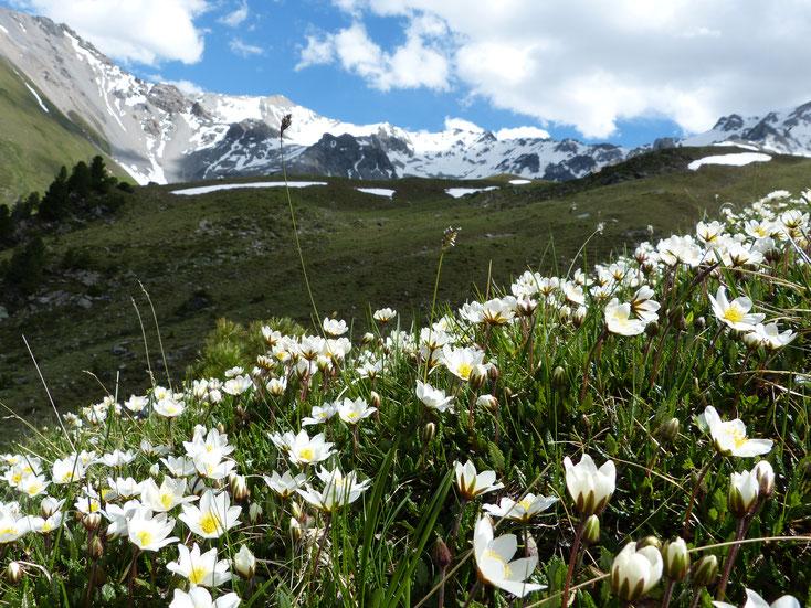 Achtster op Alp Tavrü