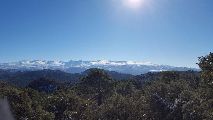 Fernblick von der Sierra de Huetor auf die spanische Sierra Nevada, noch sind wir unterhalb der Schneegrenze.
