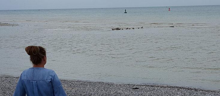 Die schwarzen Würmchen da sind Robben....ok, schlechtes Foto, mea culpa :o(