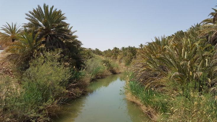 Grüner Fluß, grüne Bäume....auch das ist die Wüste