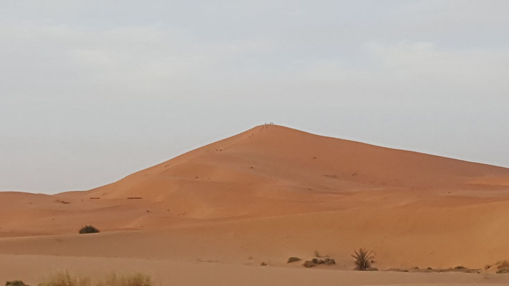Um eine Idee von der Größe der Dünen zu bekommen....die Ameisen da auf der Spitze sind Menschen..und Kamele