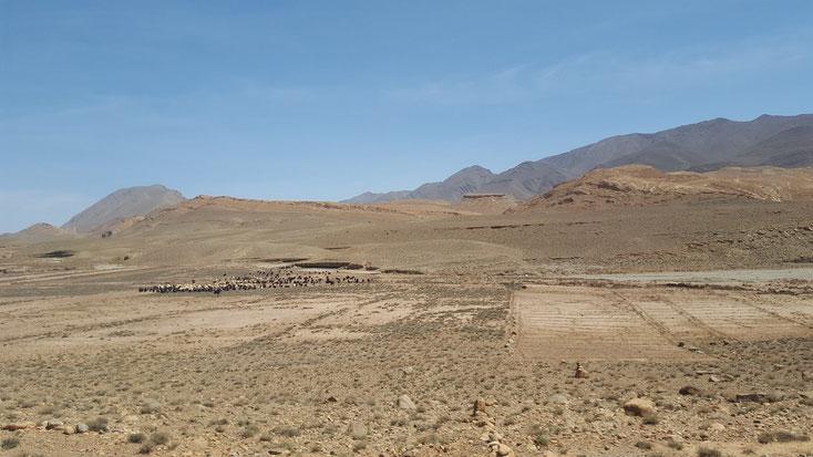 Und immer und überall: Schaf- und Ziegenherden. Was die bloß fressen in dieser Ödniss!?