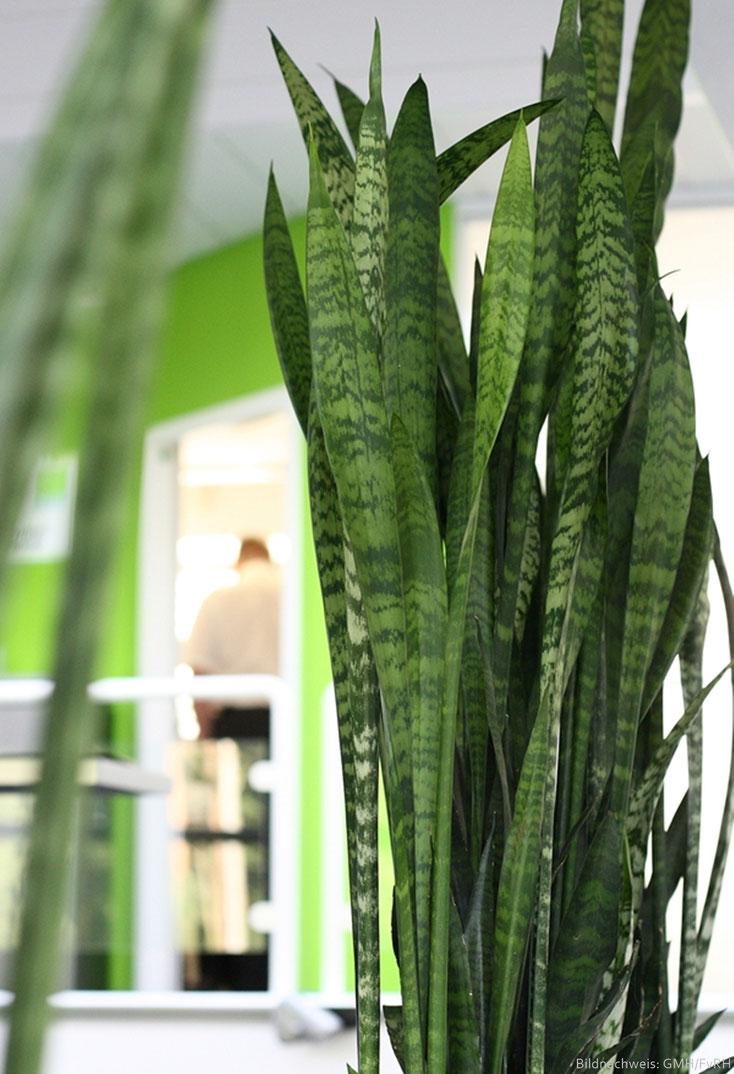 Feng Shui Pflanzen