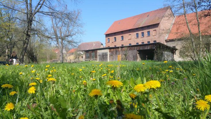 YogaMio Retreat - Entspannung in freier Natur! (Mühlenhof in Mattstedt)