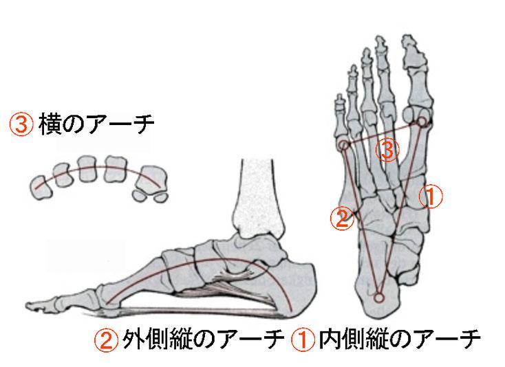 足裏(土踏まず)のアーチの種類