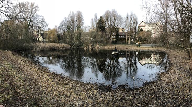 Buckower Dorfteich nach winterlicher Schilfmaat im März 2019