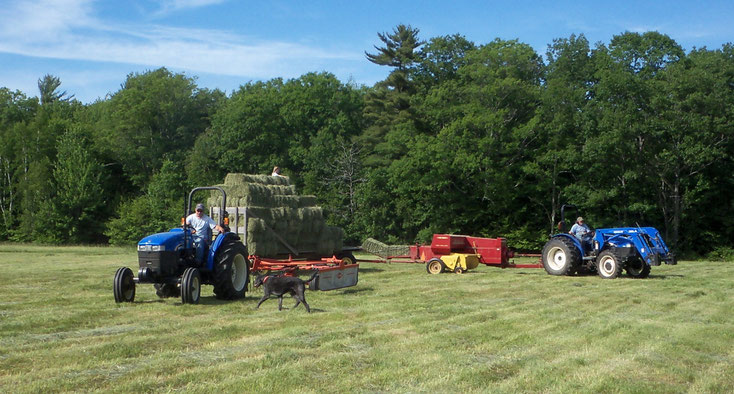The whole family pitches in each summer when the weather is perfect to make hay. (photo from 2017)