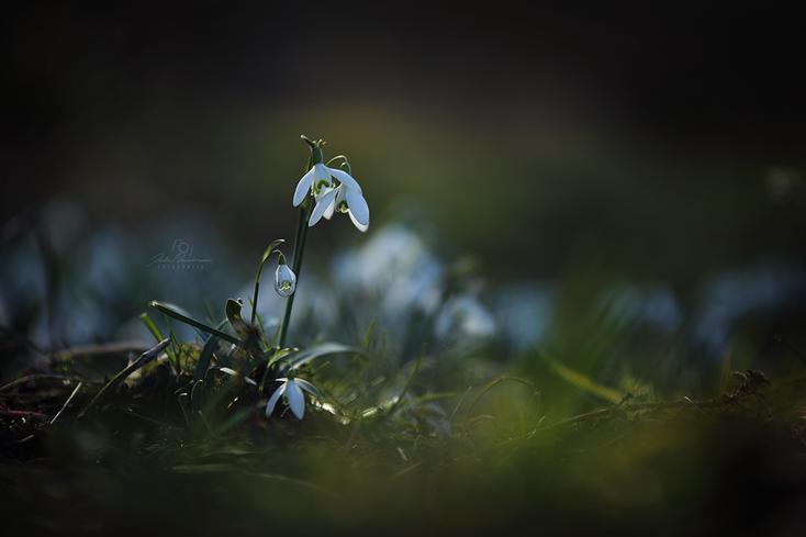 Blumen_Die Roadies_Landschaft_Fotografin Julia Neubauer