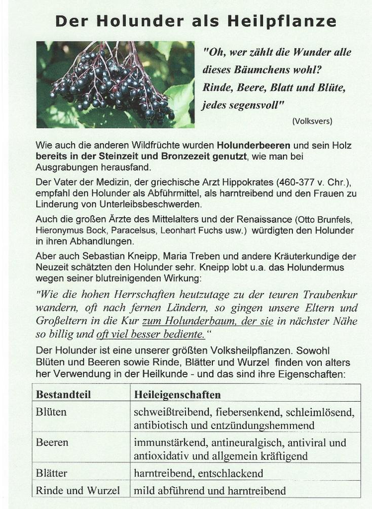 Unser Plakat zum Thema Holunder und Gesundheit
