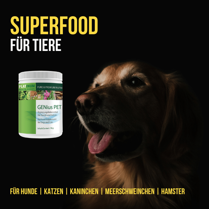 genius_pet, platinum, superfood, haustiere