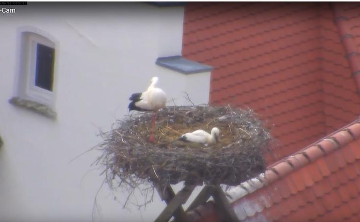 Foto: webcam Stadt Biberach
