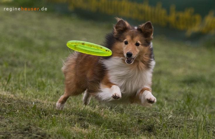 Lucky Losers - Mediazione Cani in Alto Adige
