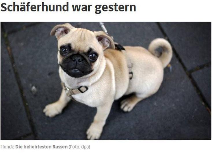 Hunde-Rassen in der Gesellschaft - Trends und Markenprodukte