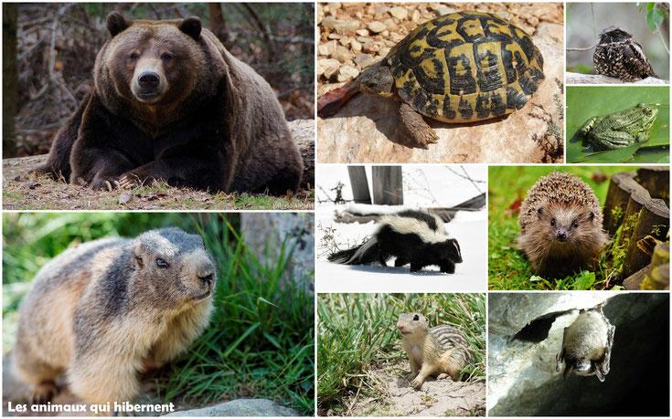 liste des animaux qui hibernent hibernation ours herisson chauve souris tortues grenouilles