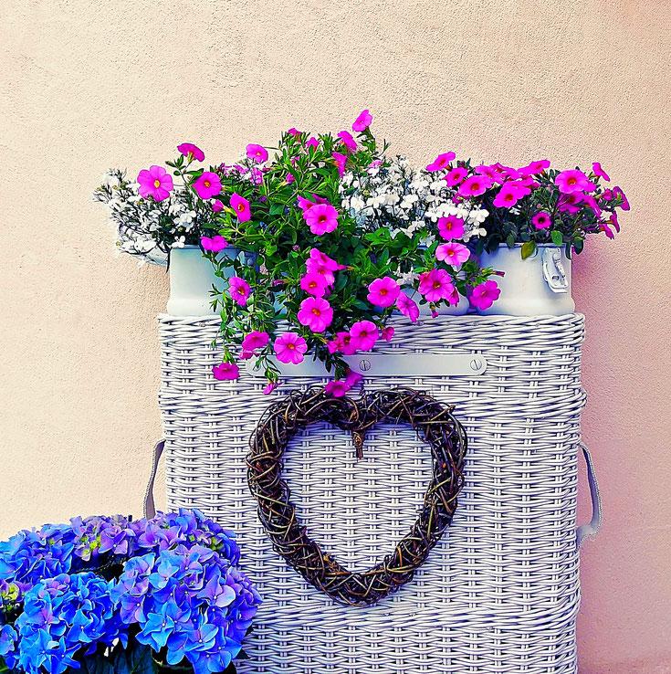 Zauberglöckchen rosa im aufgemöbelten Korb