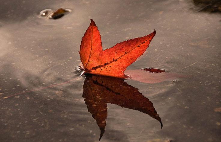Herfstblad in regenplas