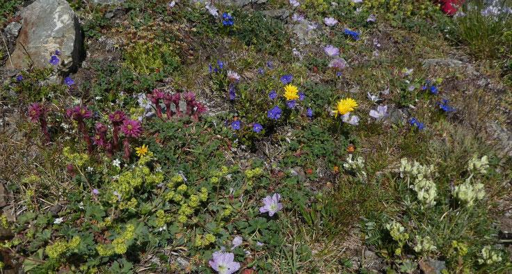 Parterre de fleurs au Cardal