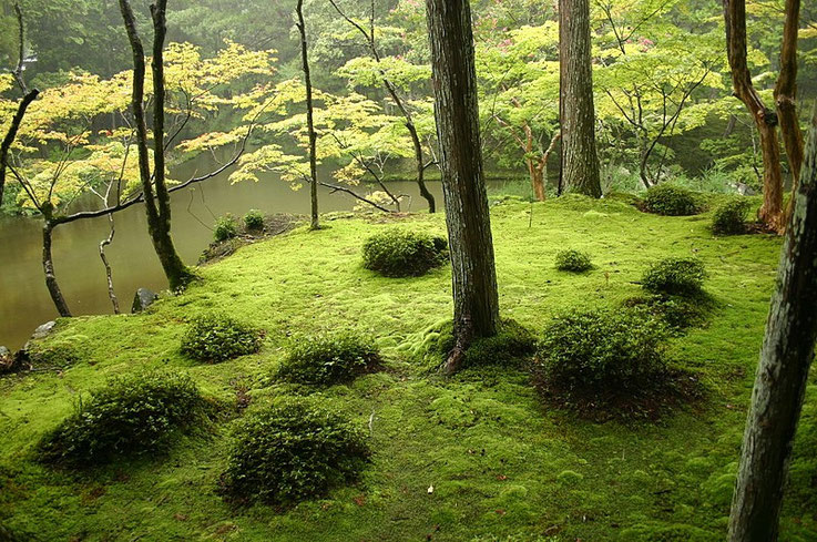 Saihouji Kokedera temple garden - one of the most popular gardens by real garden lovers. Need an advanced booking with physical letters  Source: wikipedia