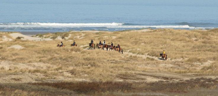 domaine du marquenterre_baie de somme_sejours nature_cheval_henson_balade_plage