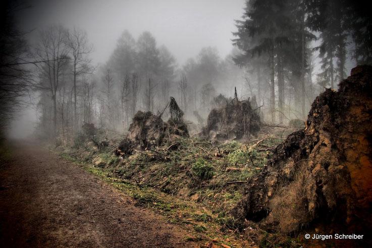 """aus der Serie """"Tränen des Waldes"""" - mit Klick zur Serie!"""