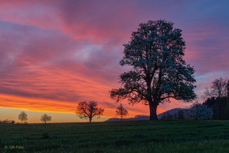 Morgenglühen in Rünenberg