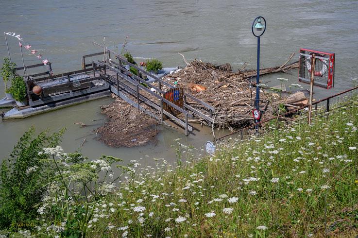 Geschiebe im Rhein nach dem Hochwasser (St.-Alban-Fähre)